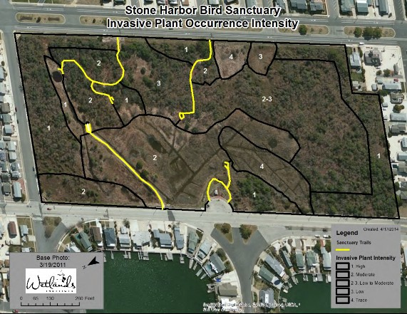 H:\Wetlands Institute\Wetlands Institute\Stone Harbor\Bird Sanctuary Restoration Project\WI_Work\Bird Sanctuary\Maps\Stone Harbor Bird Sanctuary_InvasiveLevels.jpg