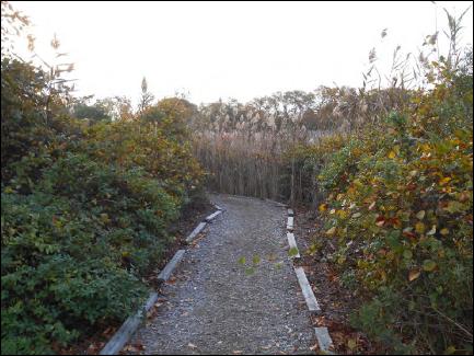 H:\Wetlands Institute\Wetlands Institute\Stone Harbor\Bird Sanctuary Restoration Project\SHBS_photos\2013-11__020.JPG