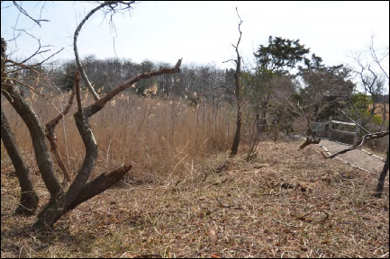 H:\Wetlands Institute\Wetlands Institute\Stone Harbor\Bird Sanctuary Restoration Project\SHBS_photos\2014-04_116.JPG